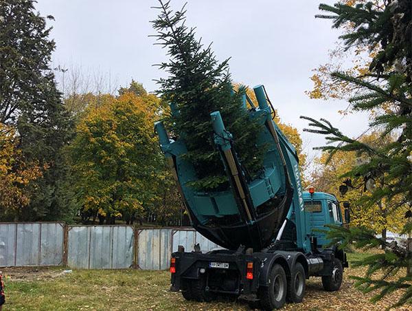 преместване на иглолистно дърво с машина за преместване на дървета